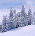 CD Weiße Wälder
